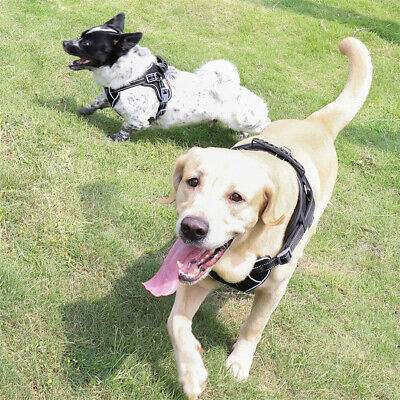 Tactical Dog Excursion K9 Training Patrol Vest Harness, Extra Large-Medium Size 8