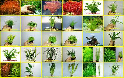 Plantas De Acuario 120 Especies A Elegir Y Solo Paga Un Envio 24/48 H