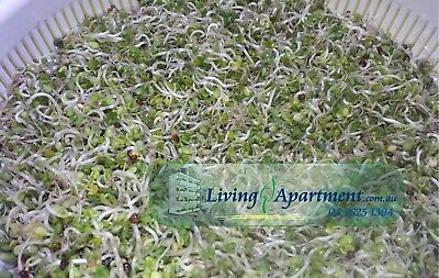 Broccoli Sprout seeds Organic Certified 100g 200g 400g 2kg