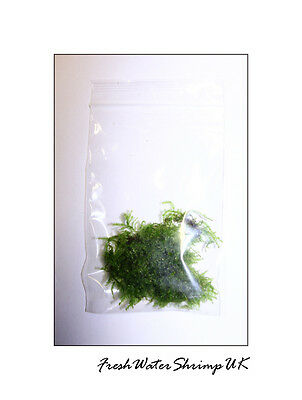 Live Aquarium Plants /  Moss / Easy / Uk Seller / Best Quality 2