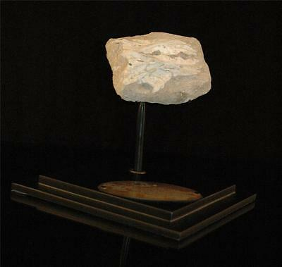 Unusual Fish Fossil Skull Bone On Matrix From Morocco On Stand #f1 4