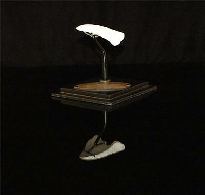 Amazing Turtle Tail Fossil Bone  With Stand From Morocco #t2 2