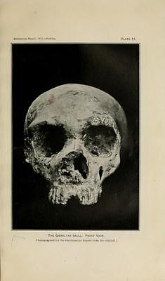 178 Rare Pre-Historic Man Books On Dvd- Primitive Human Fossils Stonehenge Flint 5