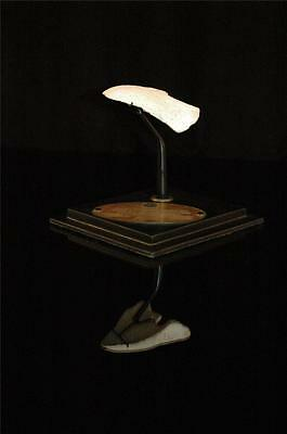 Amazing Turtle Tail Fossil Bone  With Stand From Morocco #t2 4