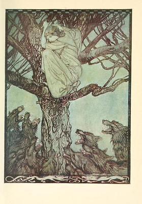41 Vintage Arthur Rackham Illustrated Childrens Books - Dvd! Fairy Tales Fantasy 6