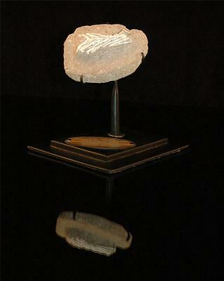 Unidentified Fish Tail Fossil Bone From Morocco On Stand #f5 2