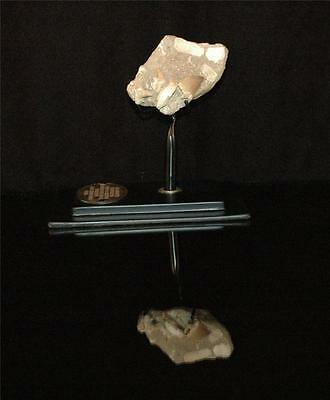 Mosasaur Fossil Tooth With Associated Bones From Morocco On Stand #m9 2