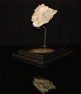 Rhombodus Binkhorsti Ray Fossil Jaw Bone On Matrix From Morocco On Stand #rh2 2