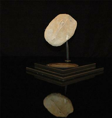 Cylindracanthus Fish Fossil Snout Bone On Matrix From Morocco On Stand #cy 2