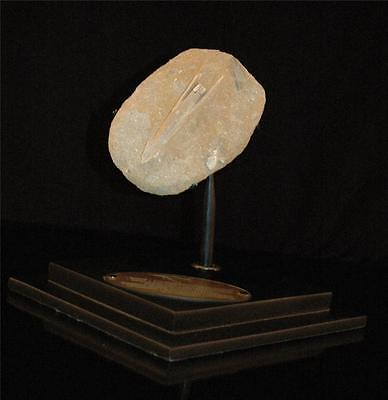 Cylindracanthus Fish Fossil Snout Bone On Matrix From Morocco On Stand #cy 3