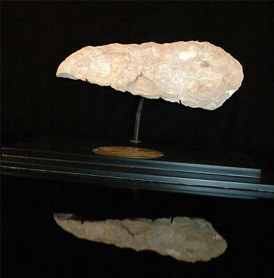 Unidentified Fish Tail Fossil Bone On Matrix From Morocco On Stand #f7 5