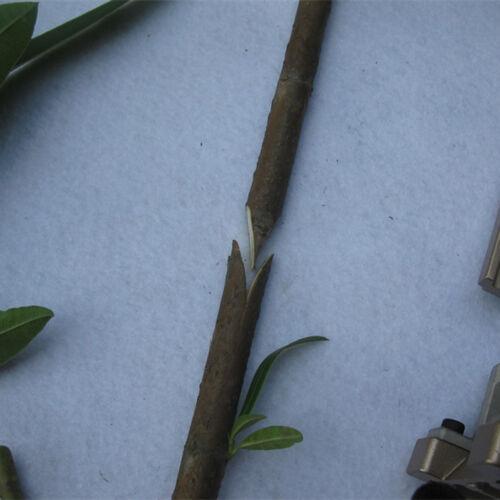 Einhand Veredelungsschere / Astschere / Zweigschere Obstbaum, langlebig