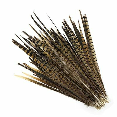 "English Ringneck PHEASANT Tail Natural Feathers 10-100 Pcs MANY SIZES 6-26"" New! 6"