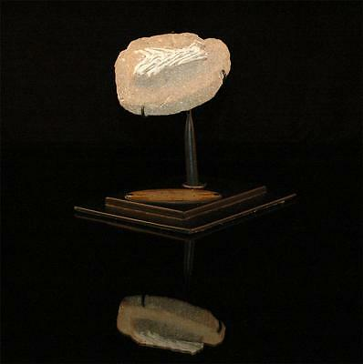 Unidentified Fish Tail Fossil Bone From Morocco On Stand #f5 3