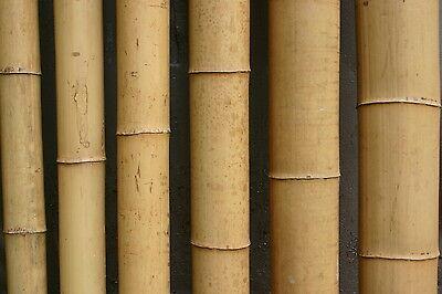 Bambusrohr schwarz Nigra  2-3 cm 1m Bambusrohre Bambusstangen Bambus black