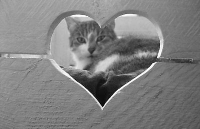 KATZENKORB + KISSEN Katze Hund Tierbett Holzkiste ALTE OBSTKISTE Vintage Shabby 6
