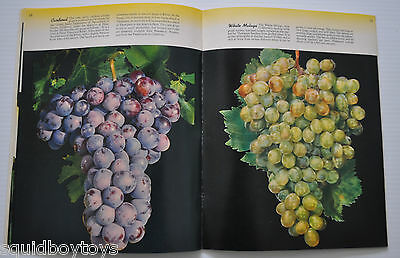 BLUE ANCHOR California Deciduous Fruits VINTAGE CATALOG 1948