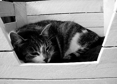 KATZENKORB + KISSEN Katze Hund Tierbett Holzkiste ALTE OBSTKISTE Vintage Shabby 5
