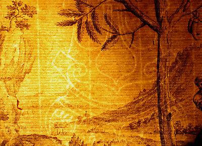 AKAZIE Baum Hülsenfrüchte großer Original Kupferstich um 1730 Botanik Biologie 2