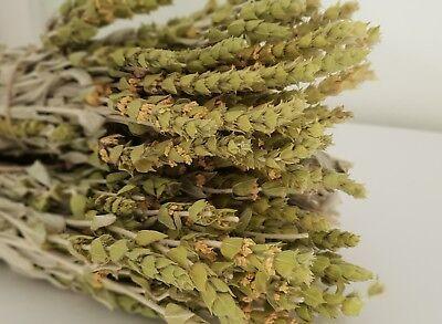 Griechischer Bergtee Sideritis Scardica Bio | 180g | Ernte 19 | Premium Qualität 4