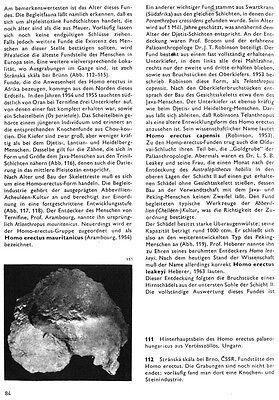 Fragment of Skull of Homo erectus palaeohungaricus - a resin copy of original 7