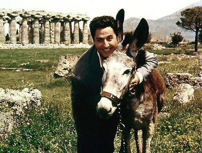 Santa Lucia (1956) - mit Vico Torriani, Karin Dor - Filmjuwelen [DVD] 5