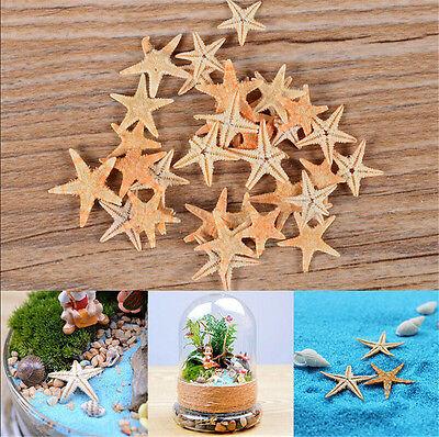 50x Mini Starfish Sea Star Shell Beach Wedding Craft DIY Making Decor Miniature