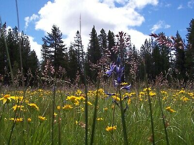 1.55 Ac~Oregon Land~Gorgeous Ranch~Near Crater Lake & California~Cash Sale 3