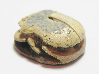 Zurqieh -Af2051-  Ancient Egypt - New Kingdom, 1400 B.c . Steatite Scarab