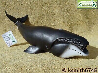 CollectA MINKE WHALE solid plastic toy wild zoo sea marine animal NEW *