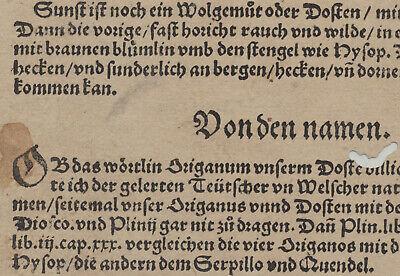 OREGANO Dost WOLGEMUT Apothekerkräuter Original Textblatt um 1590 Küchenkräuter 5