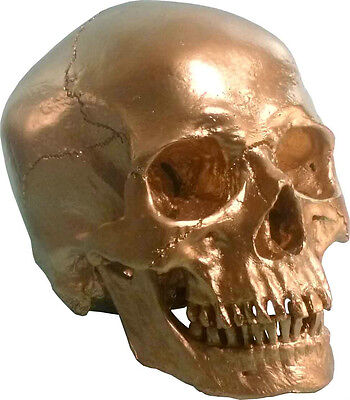 #3093-BRONZE Metallic Color Direct From USA Human Skull Replica Life Size