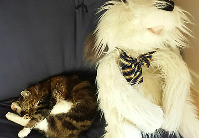 UK Adjustable Pet Cat Dog Teddy Doll Neck Tie Grooming Bowtie Mix Fashion Colour 6