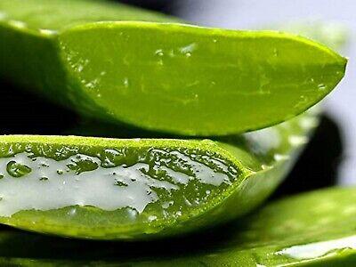 Aloe Vera Gel 100% Pure Natural Clear No Color No Fragrance~By Santmira 3
