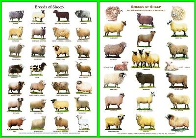 POSTERS A4 size...CATTLE, SHEEP, PIGS, POULTRY, DUCKS, TRACTORS, HORSES, GOATS, 4