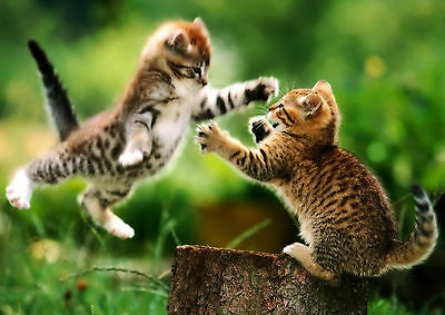 Image result for lovely cat pictures