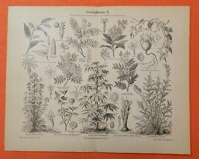 Arzneipflanzen I - III Baldrian  Ricinus Safran Krokus Aloe  Holzstiche  1893 2
