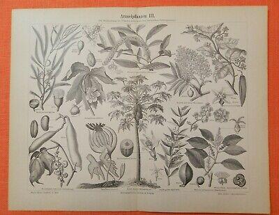Arzneipflanzen I - III Baldrian  Ricinus Safran Krokus Aloe  Holzstiche  1893 3