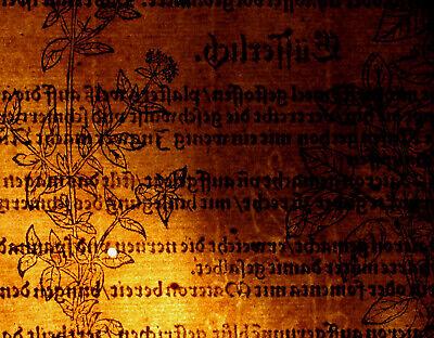 OREGANO Dost WOLGEMUT Apothekerkräuter Original Textblatt um 1590 Küchenkräuter 3