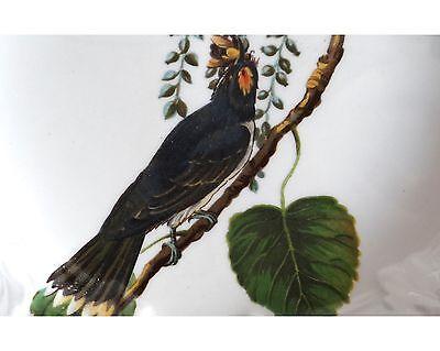 """1942 Vintage AUDUBON BIRDS #79 /""""KINGBIRD/"""" Color Art Plate Lithograph"""