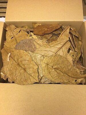 Seemandelbaumblätter 0,7 Kg B-Ware Catappa Leaves Wasseraufbereitung Ketapang