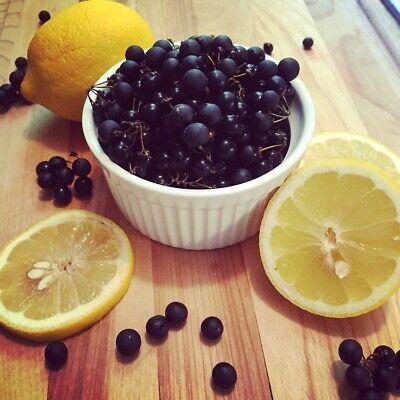 """+ 50 Graines """"Myrtille Du Soleil"""" - Sunberry - Rare !!!- Frais de port Unique !! 2"""