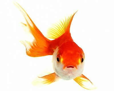 Tetra Goldfish weekend, vacation food, weekend food for all goldfish, 10 sticks 2 • EUR 3,60