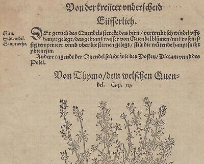Apothekerkräuter QUENDEL Thymian Orig. Holzstich auf Textblatt 1590 Heilkräuter 4