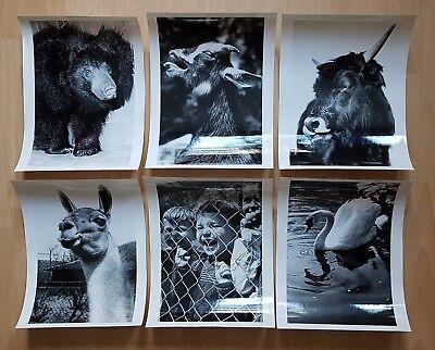 22 x Zoo Tier Fotografien DRESDEN um 1960/70 Dr. Ullrich ? Foto Hegewald( F16742