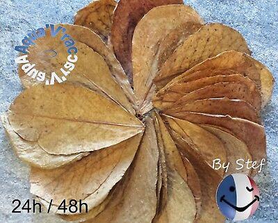 Feuilles de Catappa feuille AAA+ 20-35cm Betta Crevette Discus express 24/48H ! 2