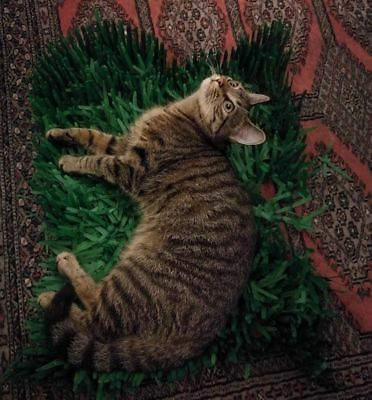 3 x Tissue Paper Grass Mats for cat or kitten toy FAST DELIVERY pet toys. 9