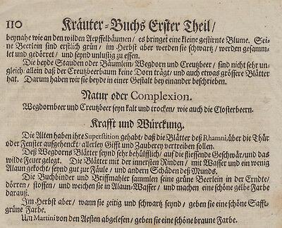 Faulbaum Kreuzdorn WEGEDORN Original Textblatt Fragment um 1590 Apotheker Arznei 7