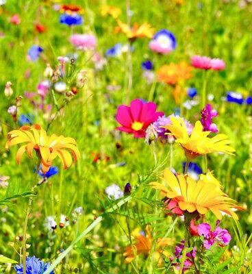 Blumenmischung Sommerblumen Bienenweide Schmetterlingswiese Samen 38760 Einj