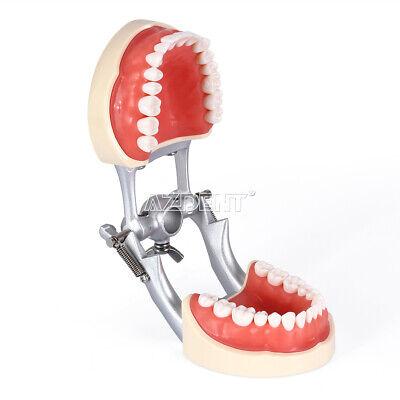 Kilgore NISSIN 200 Type Teeth Dental Typodont Teeth Model With Removable Teeth 6